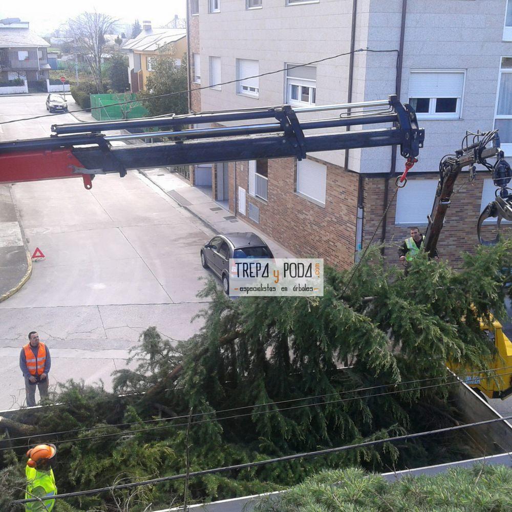 cortar arbol ponferrada arboricultura